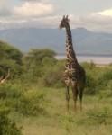 Manyara National Park, Tanzania